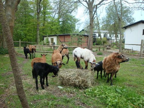 Garten mit Schafgehäge im Hintergrund