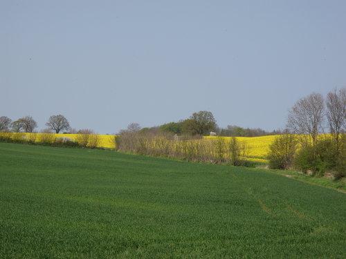 Landschaftsaufnahme Kronsgaard