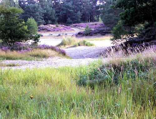 Naturerholungsgebiet Die Heide in Bl�te