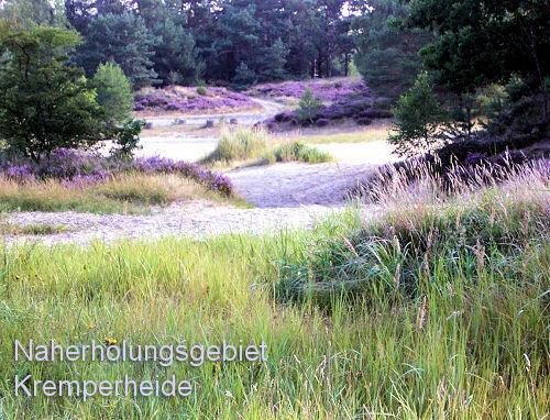 Bl�hende Heide