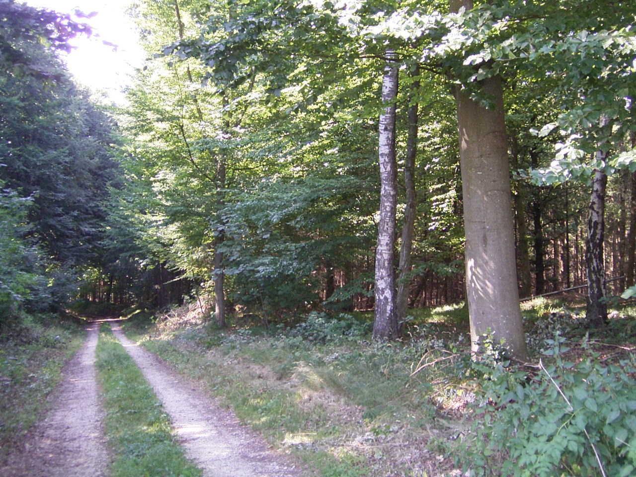 Nordic Walking Strecke Herrenholz