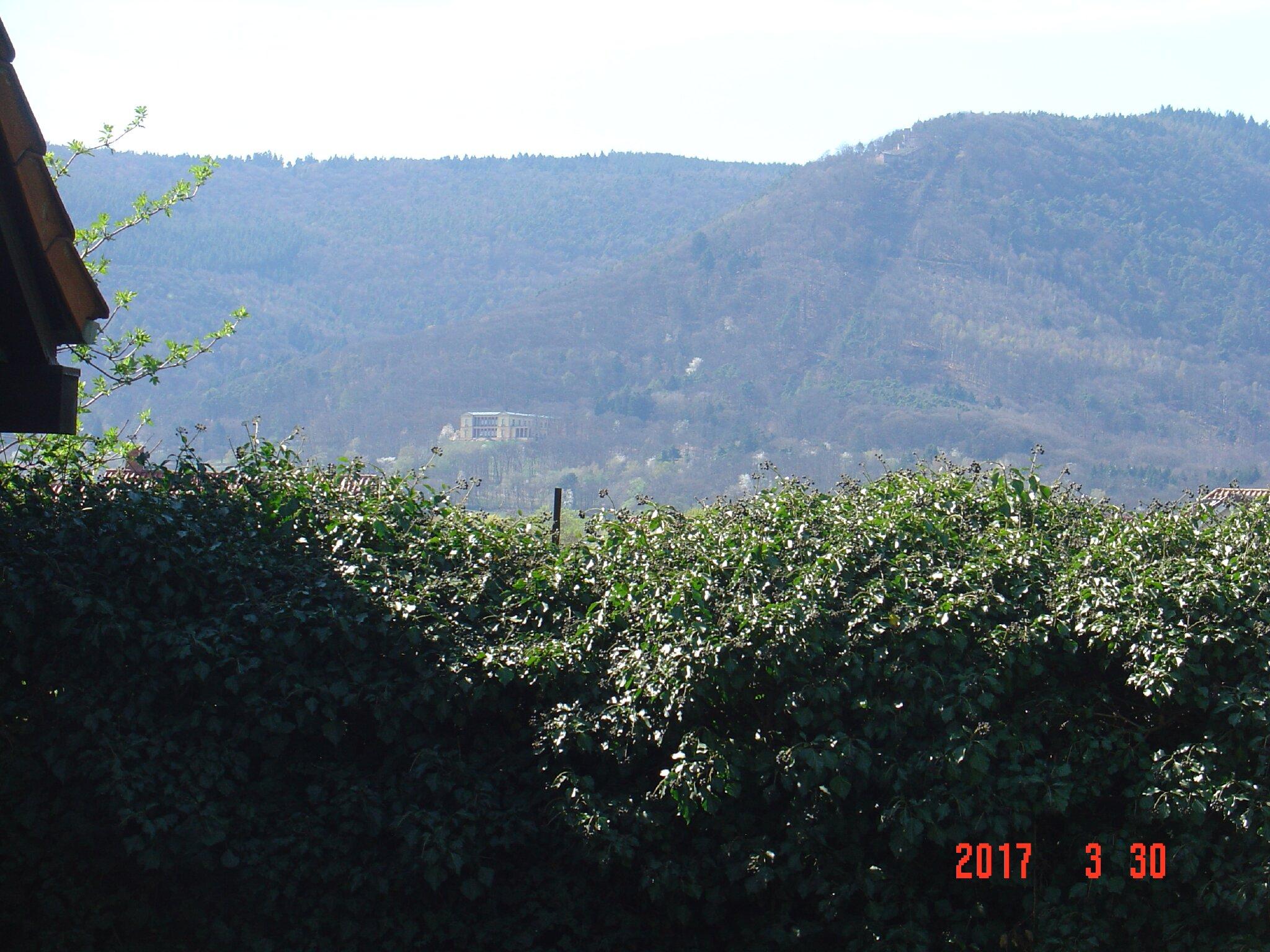 Garten mit Schaukelliege