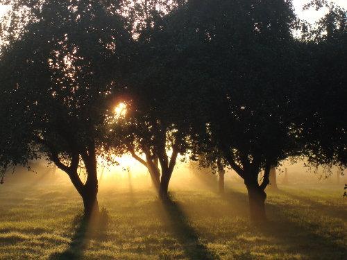 Morgenlicht im Obstgarten