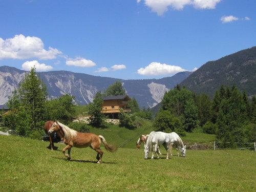 Unsere Pferde vor dem Landhaus Anna