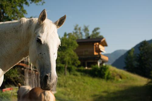 Pferdportät (Hintergrund Landhaus Anna)