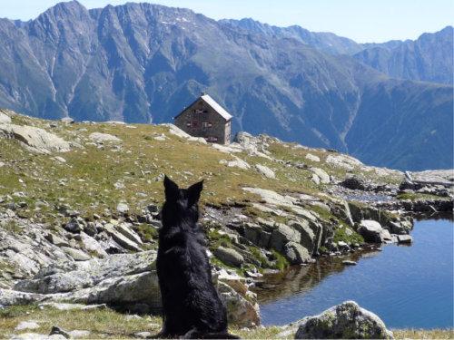 Auch Hunde lieben das Wandern