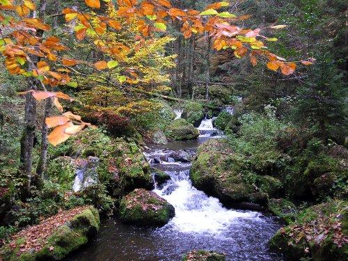 Herbstidylle im Hochschwarzwald