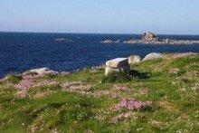 Küste bei Plouescat
