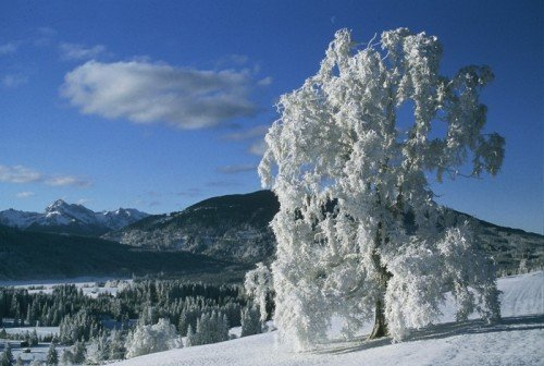 Saulgrub sch�nster Baum