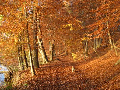 Herbst in Altenhof