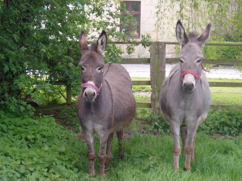 """Unsere Esel """"Camilla und Windy"""""""