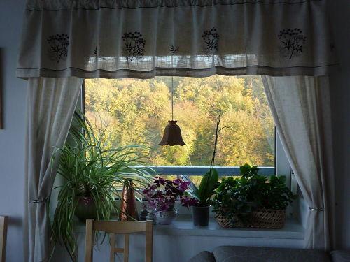 Blick vom Giebelfenster auf den Wald