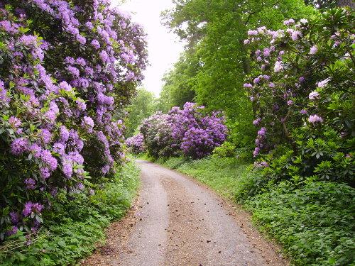 Rhododendrenallee bei Lietzow