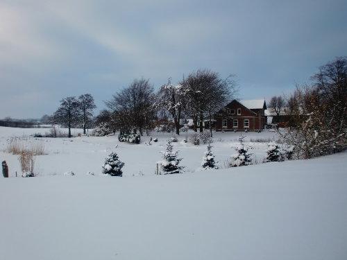 Teichlandschaft im Schnee