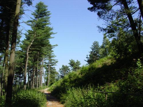 Wald und Wandergebiete in der Nähe