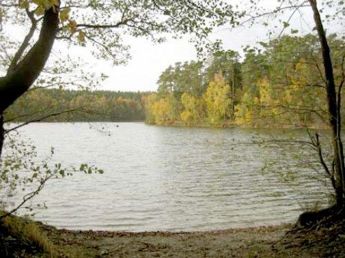 Nahegelegener Waldsee