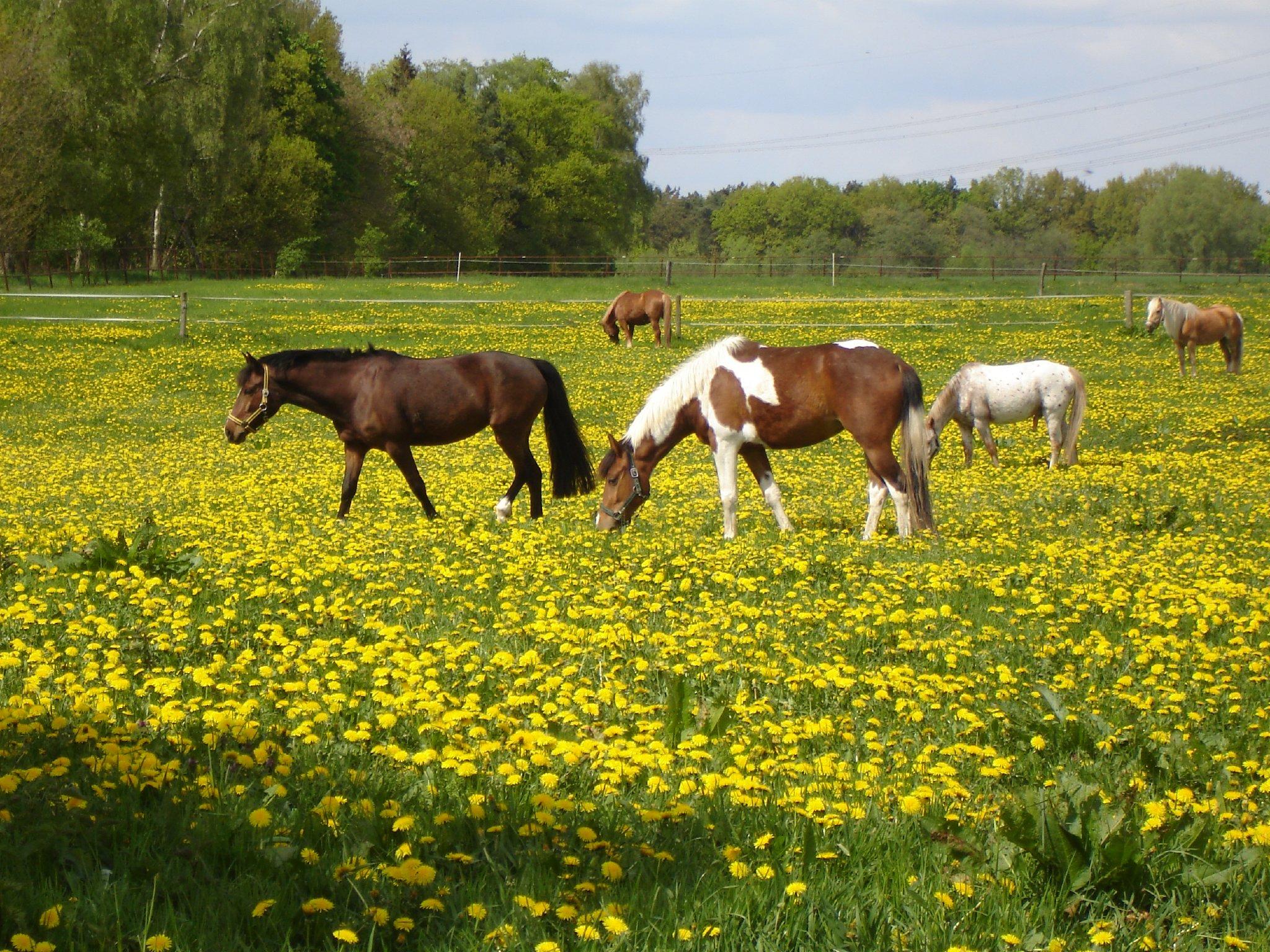 Felder, Wiesen, Seen und Pferde.