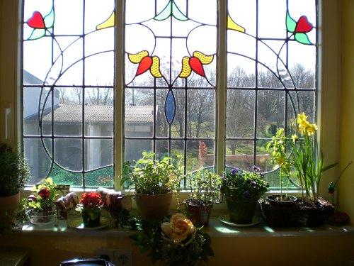 Fenster in der Küche