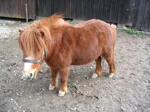 kostenloses Ponyreiten auf unseren Ponys