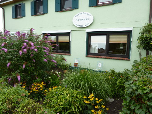 Blumenbüsche vor dem WZ + SZ Fenster
