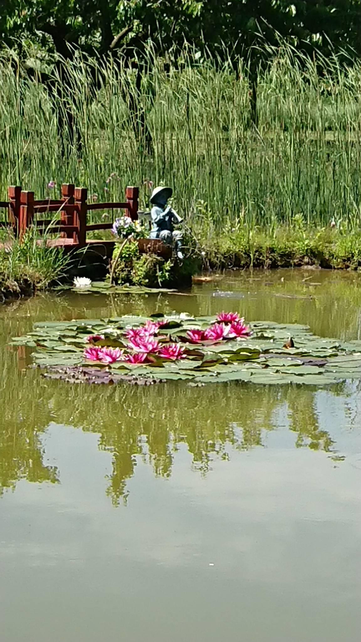 Blick auf den Teich im Garten