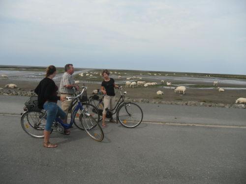 Radfahren in B�sum