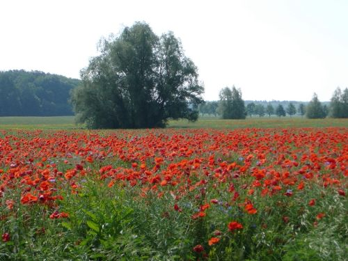 Mecklenburg im Sommer