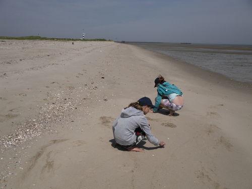 Strandgut sammeln