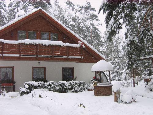 Fichtenwalde im Winter
