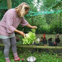 Vermieter: Unsere Hühner