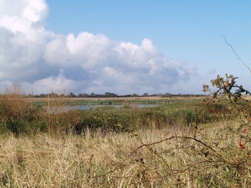 Biotop am Strand von Hohenfelde