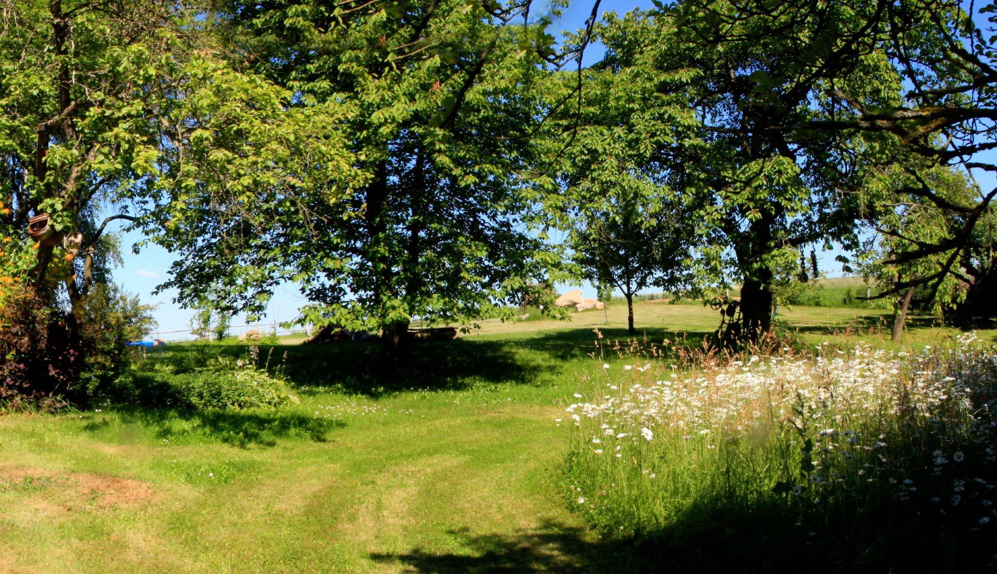 Obstgarten mit Haus