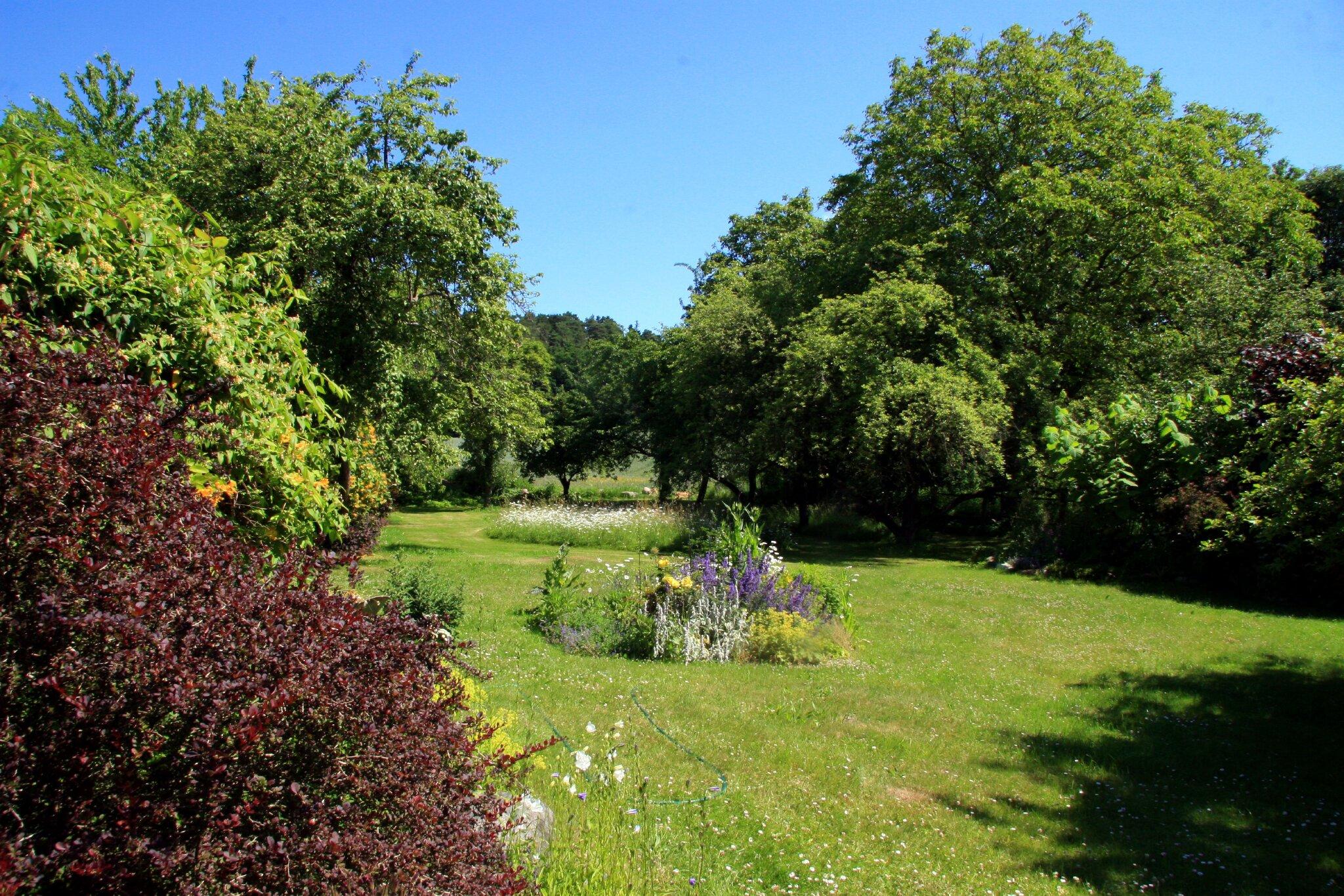 Blick in den Obstgarten / Hof
