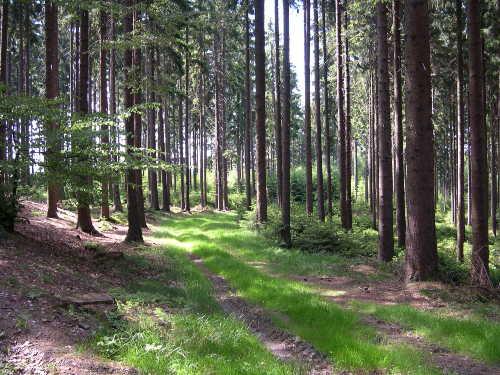 Wandern in der Natur