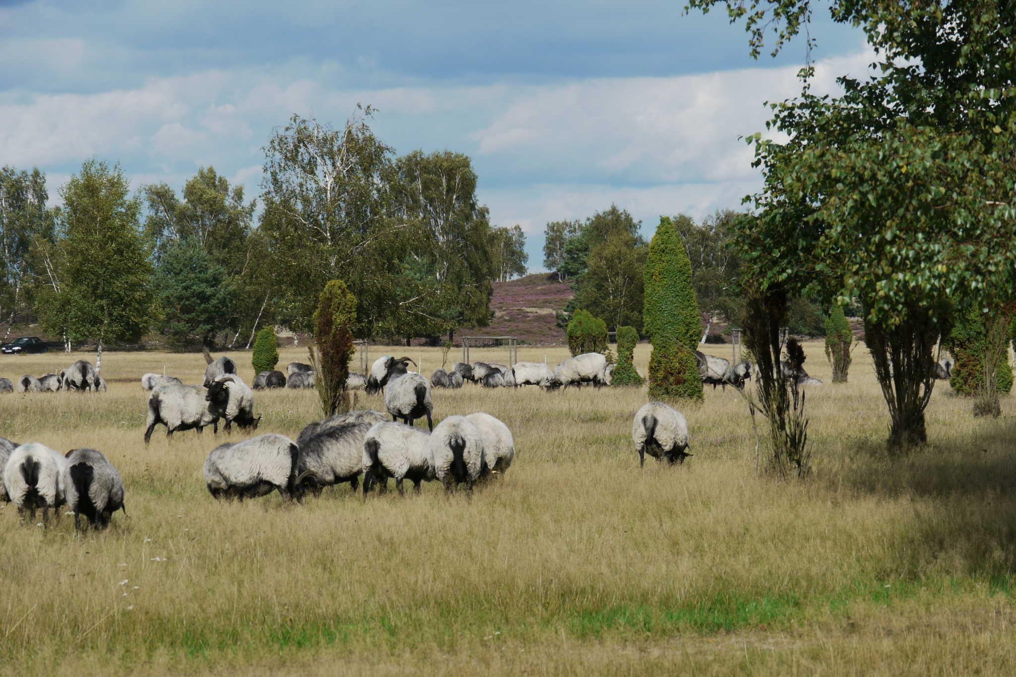 Detail aus der Nemitzer Heide