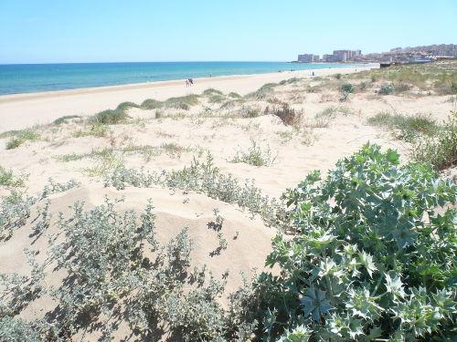 """D�nen und Strand vor unserer """"Haust�r"""""""