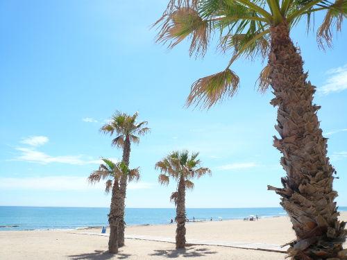 Palmen am Sandstrand