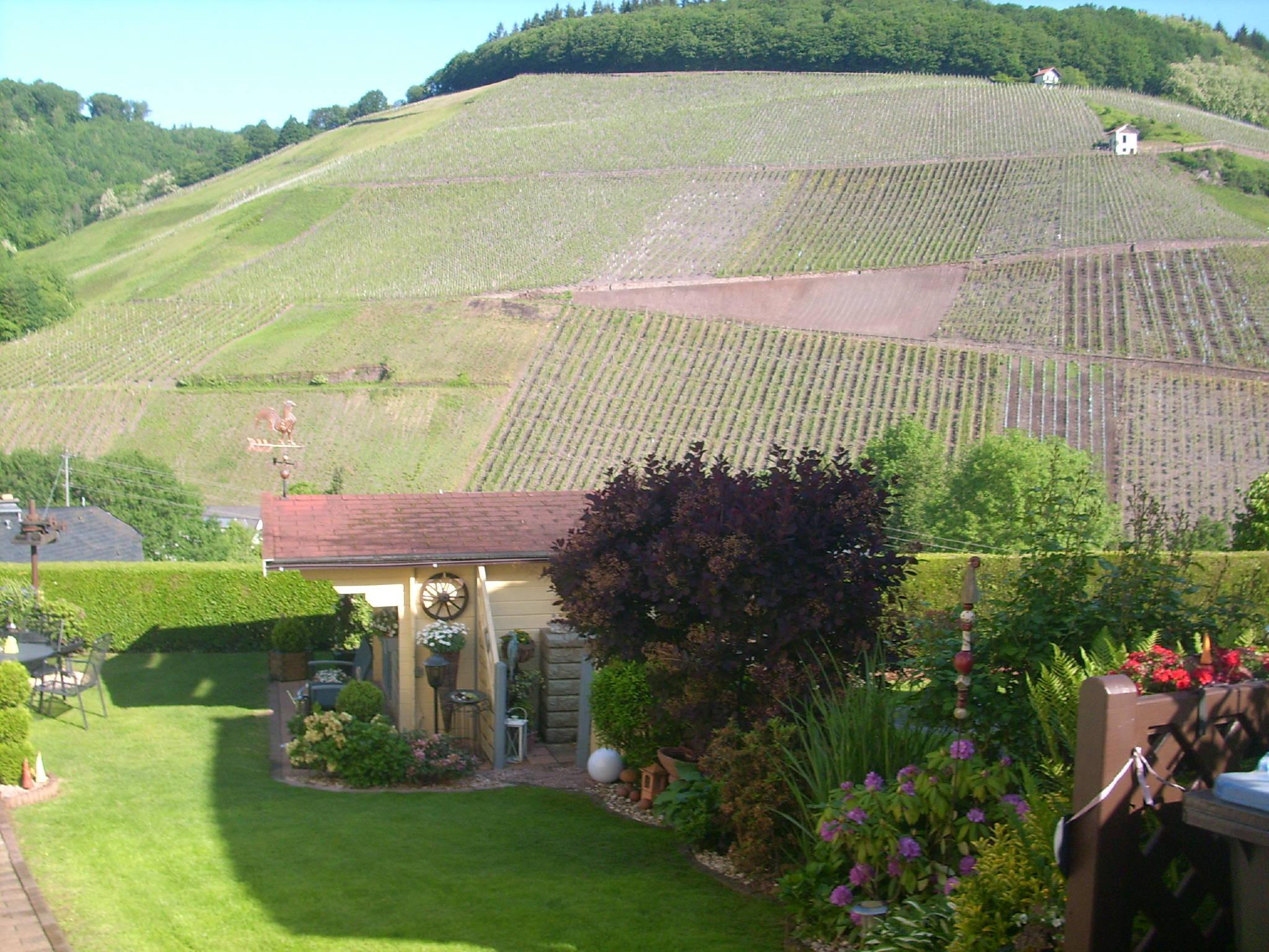 Blick von der Terrasse auf die Weinberge