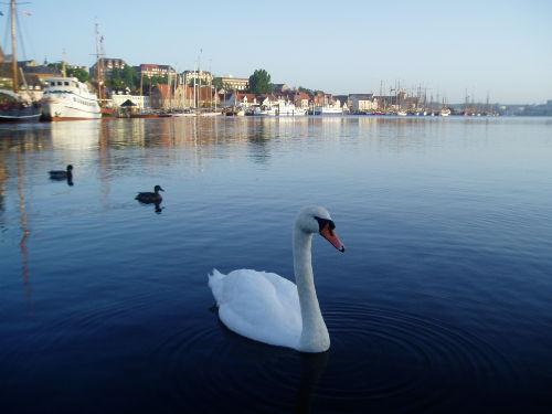 Unser Schönes Flensburg im Sonnenaufgang