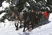 Pferdeschlittenfahrt im Winterwald