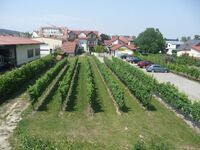 Winzerhaus 'Im Linsenbusch' in Ruppertsberg - kleines Detailbild