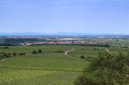 Panorama von Ruppertsberg