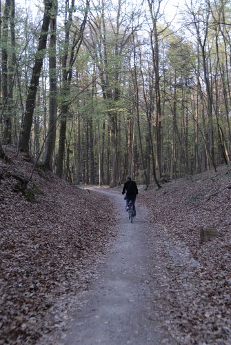Waldweg bei Baabe