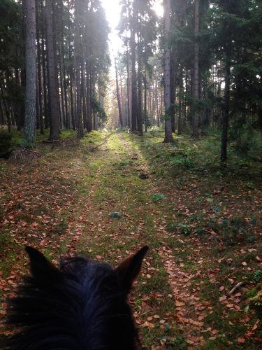 Ausreiten in umliegenden Wälder
