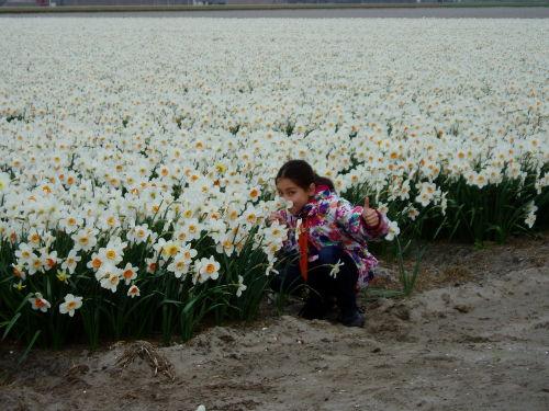 Im Frühling Schöne Blumen Felder.