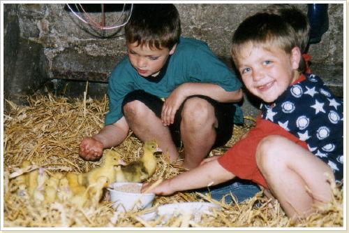 Unsere Hühnerkücken im Frühjahr