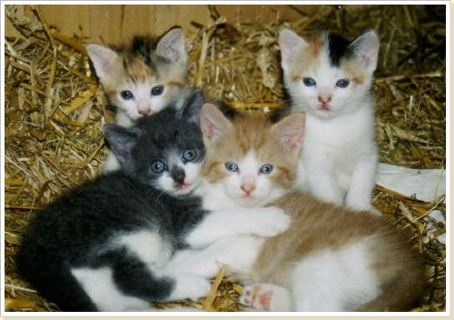 Die alljährlichen Katzenbabys