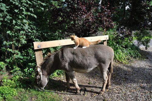 Esel mit Kater Carlo