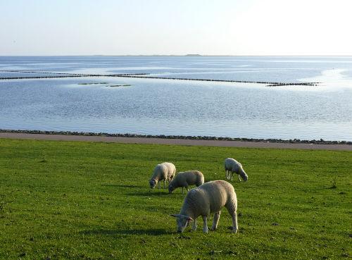 Ferienwohnungen am Wattenmeer