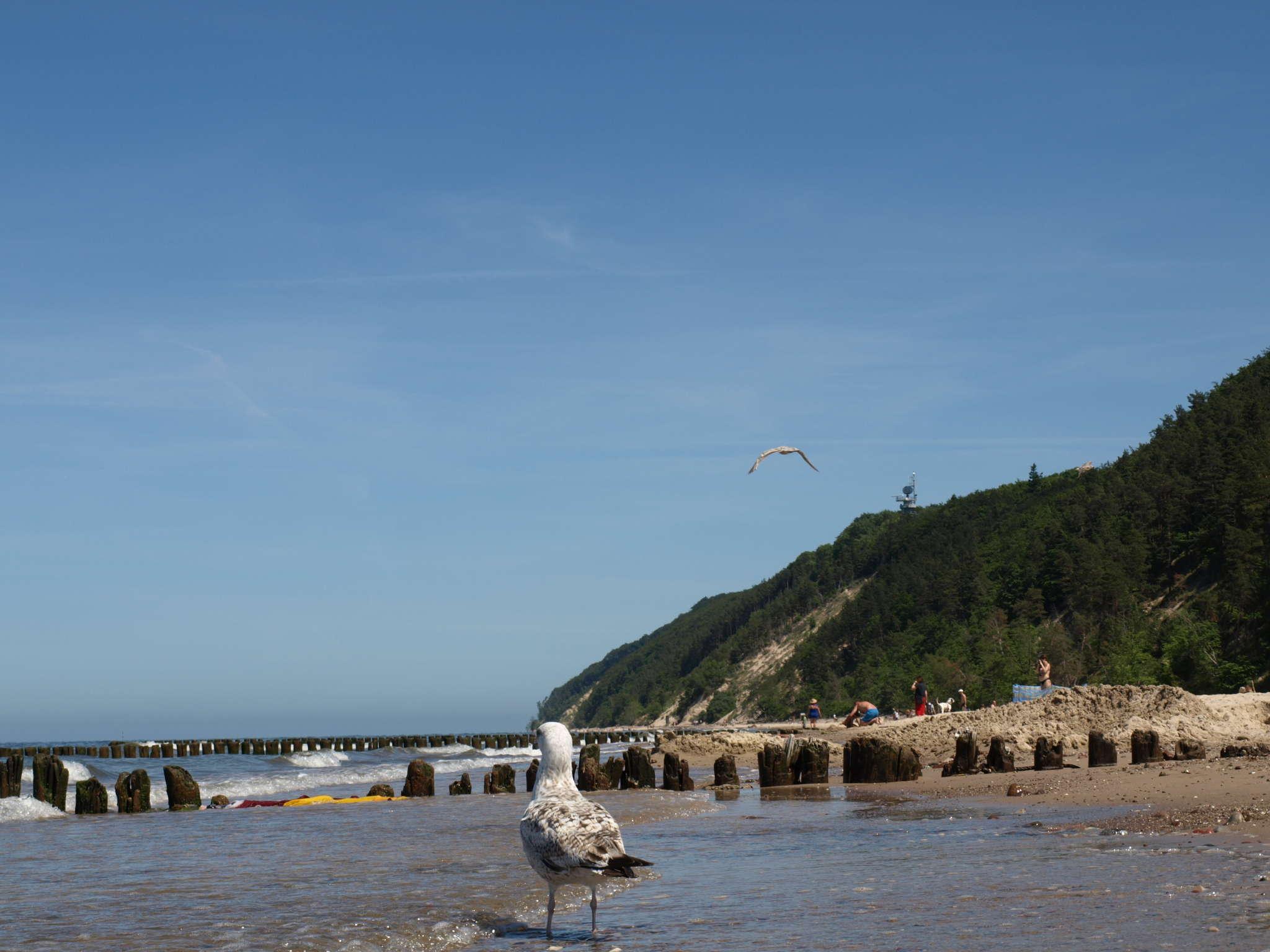Möwen am Strand Richtung Nationalpark